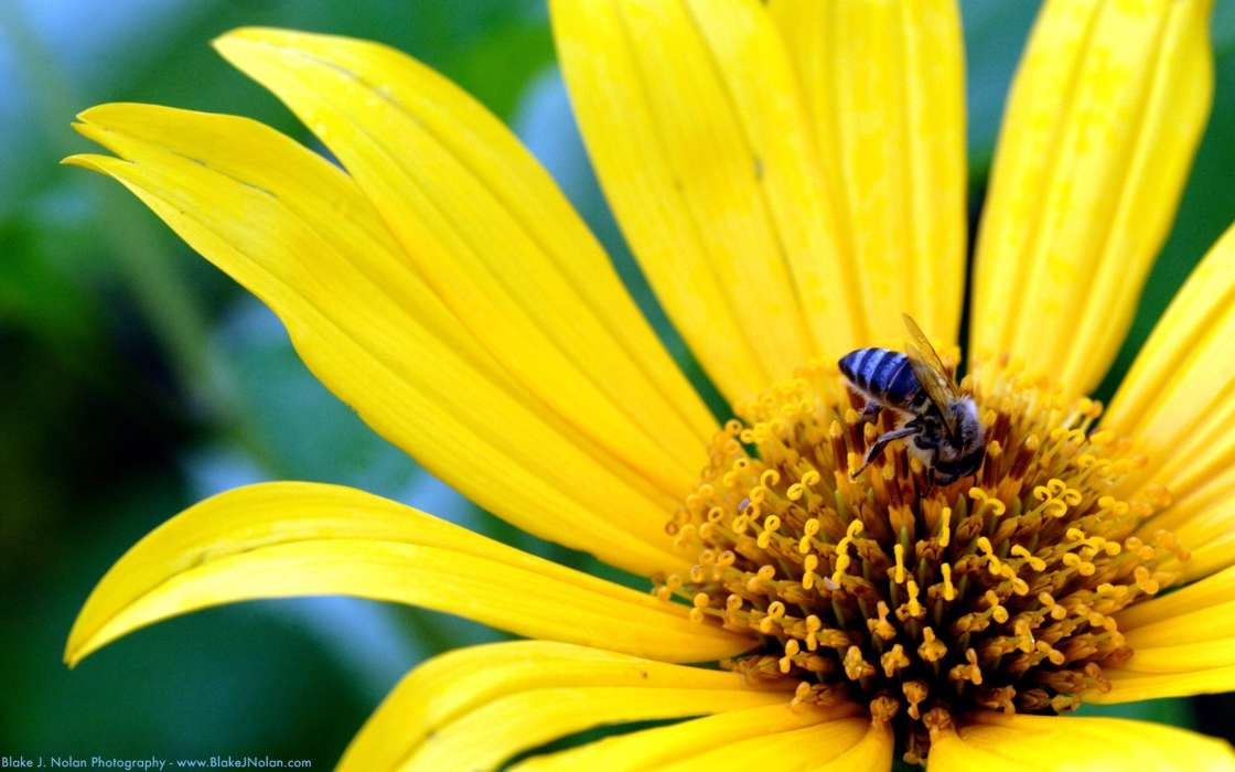 Plants, Flowers, Insects, Bees