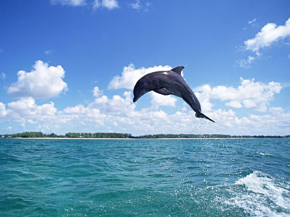 Animals, Water, Sky, Dolfins, Fishes