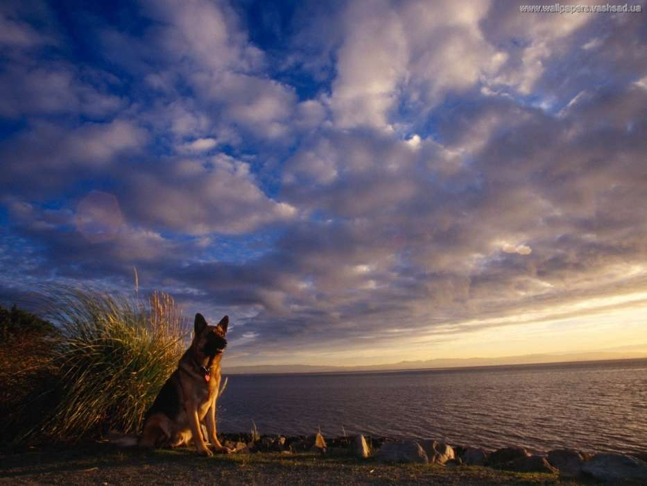 Landscape,Dogs,Animals