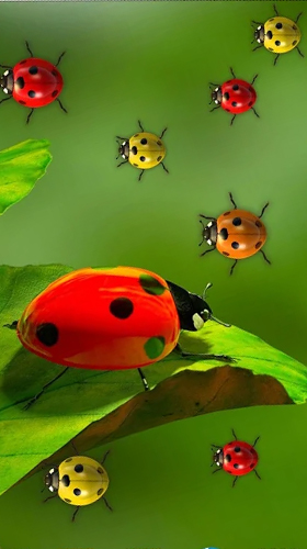 Ladybugs by 3D HD Moving Live Wallpapers Magic Touch Clocks - télécharger gratuit un fond d'écran animé Interactif pour le portable.